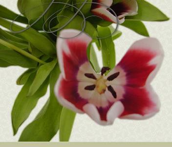 http://merkushova-ns.ru/img/flower.jpg